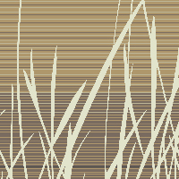 Grassfields - Spring