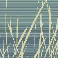 Grassfields - Summer