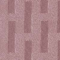 Square Root - Daphne